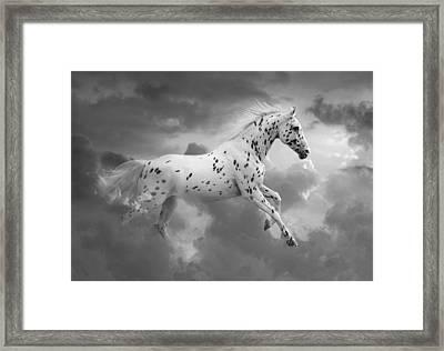 Leopard Appaloosa Cloud Runner Framed Print by Renee Forth-Fukumoto