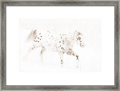 Leopard Appaloosa Runs In Snow Framed Print by Carol Walker