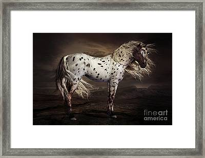 Leopard Appalossa Framed Print