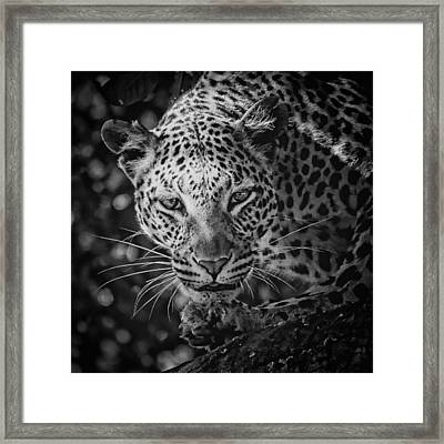 Leopard, Black And White Framed Print