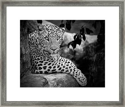 Leopard Framed Print by Cesar March
