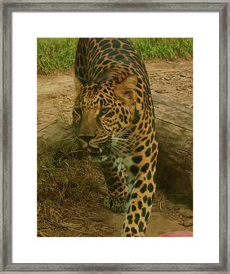 Framed Print featuring the photograph Leopard by Chris Flees