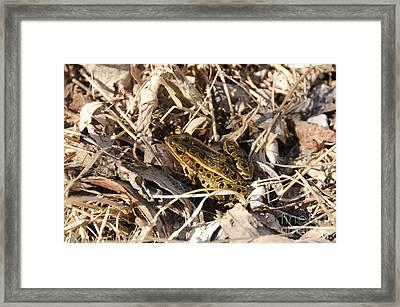 Leopard Frog Framed Print by Lana Raffensperger