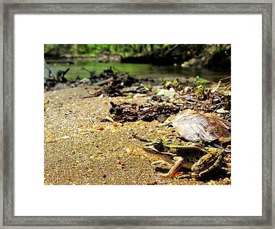 Leopard Frog Landing Framed Print