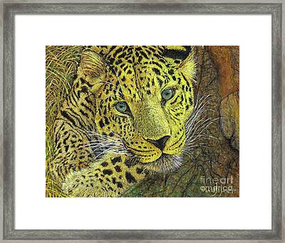 Leopard Gaze Framed Print