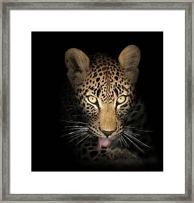 Leopard In The Dark Framed Print