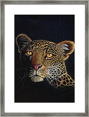 Leopard In The Dark Framed Print by Lorraine Foster