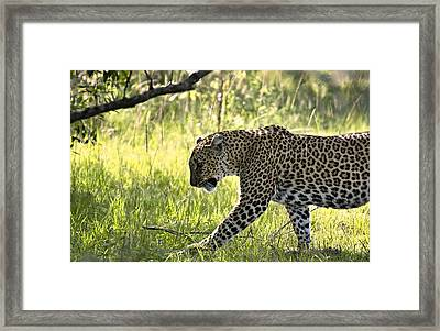 Leopard In The Grass Framed Print