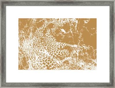 Leopard Framed Print by Joe Hamilton