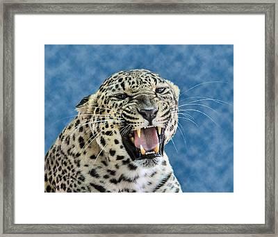 Leopard  Framed Print by Keith Lovejoy