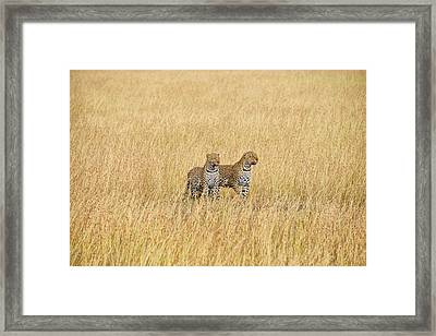 Leopard Pair Framed Print