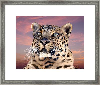 Leopard Portrait Number 3 Framed Print