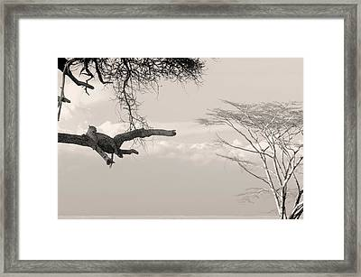 Leopard Resting On A Tree Framed Print