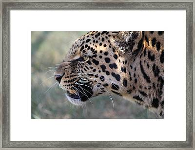 This Is Your Only Warning Framed Print