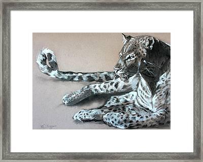 Leopard Sketch Framed Print