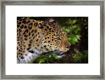Framed Print featuring the photograph Leopard by Steve Stuller