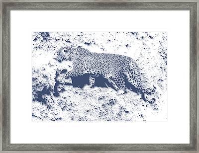 Leopard5 Framed Print by Joe Hamilton