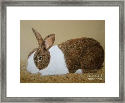 Les's Rabbit Framed Print