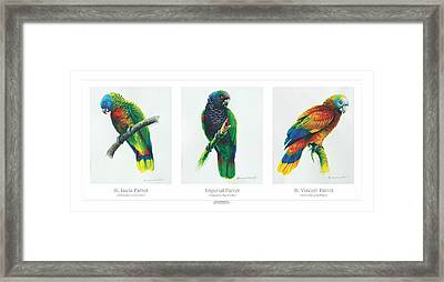 Lesser Antillean Parrots Triptych Framed Print by Christopher Cox