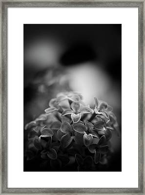 Lessons Of The Lilac Framed Print