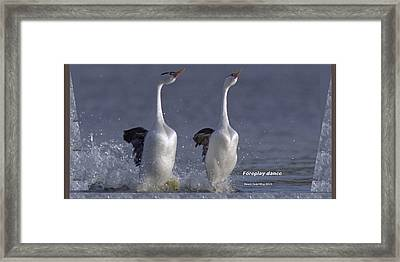 Let Humans Learn From The Nature  Foreplay Dance It Pleases Everyone Framed Print by Navin Joshi