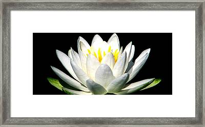 Let It Go Framed Print by Angela Davies
