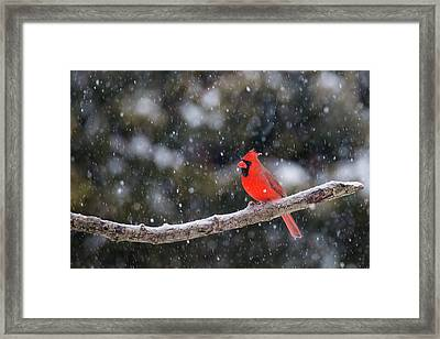 Framed Print featuring the photograph Let It Snow by Mircea Costina Photography