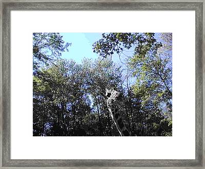 Let Me Give You A Kiss Framed Print by Daniel Henning