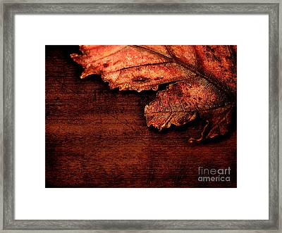 Let Me Hold You...  Framed Print by Dana DiPasquale