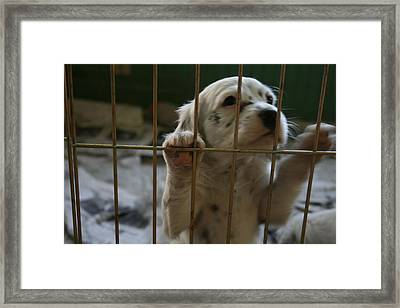 Let Me Out Framed Print by Jeff Porter