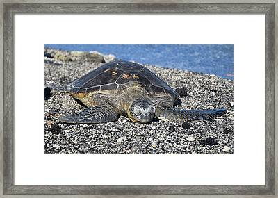 Framed Print featuring the photograph Let Me Rest by Pamela Walton