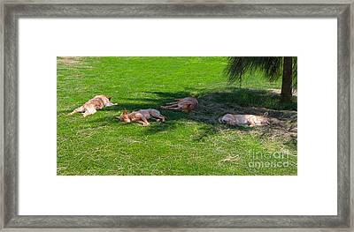 Let Sleeping Dogs Lie Framed Print by Louise Heusinkveld