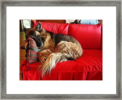 Let Sleeping Dogs Lie Framed Print