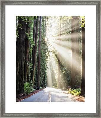 Let The Sun Shine Framed Print