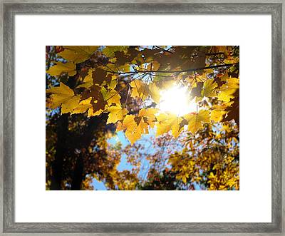 Let The Sun Shine In Framed Print by Angela Davies