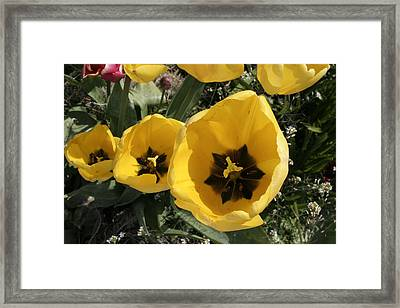 Let The Sunshine In Framed Print by Mary Gaines