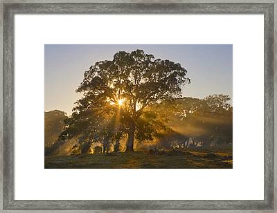 Let There Be Light Framed Print by Mike  Dawson