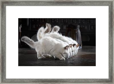 Let There Be Milk Framed Print by Timo Lehto