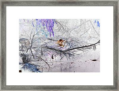 Let Your Mind Fly Away Framed Print