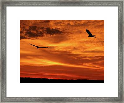Let's Dance Framed Print by Adele Moscaritolo