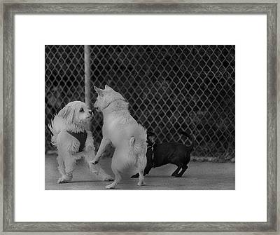 Lets Dance Framed Print