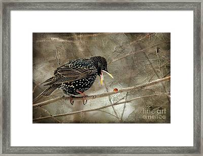 Let's Do Lunch Framed Print by Lois Bryan