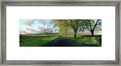 Let's Drive Through The Vineyard Framed Print