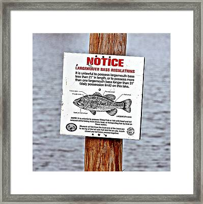 Framed Print featuring the photograph Let's Go Fishing by KayeCee Spain