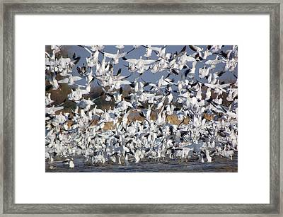 Lets Go Framed Print by Richard Verkuyl
