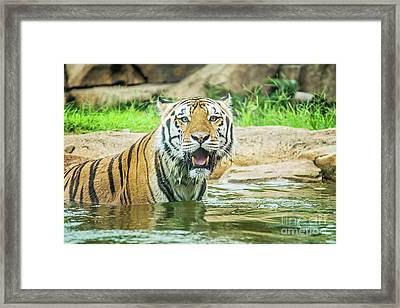 Let's Play Framed Print