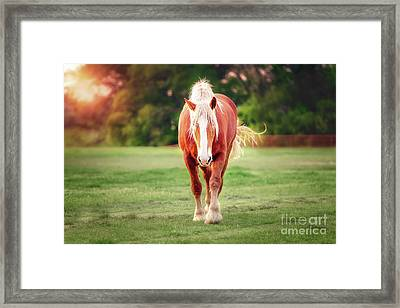 Let's Play Framed Print by Tamyra Ayles