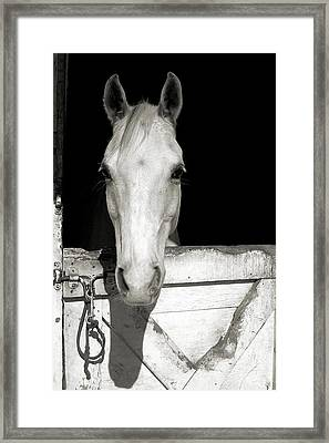 Let's Go Ride Framed Print by JAMART Photography