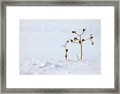 Let's Stick Together Framed Print by Evelina Kremsdorf