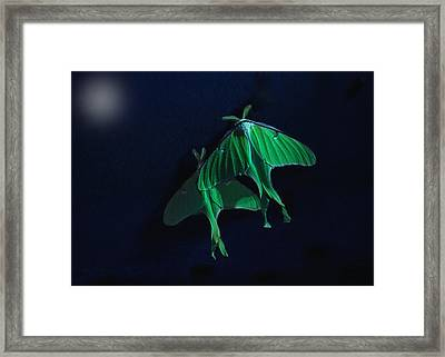 Framed Print featuring the photograph Let's Swim To The Moon by Susan Capuano